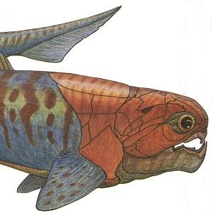 pancerna ryba z Gór Świętokrzyskich
