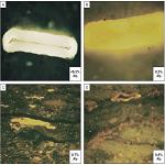 Badania materii organicznej rozproszonej w skałach osadowych